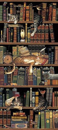 I have always loved this picture. It has two of my favorite things in it- books and cats. <3