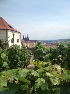 Blick über Weinberge auf Prag - traumhaft
