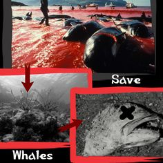 #ocean #whales #beezmap
