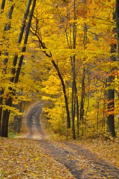 Autumn road (Hidden Lake Gardens, west of Tecumseh, Michigan) by Julie Falk cr. Flor Magnolia, Lake Garden, Autumn Scenery, Back Road, All Nature, Fall Pictures, Take Me Home, Mellow Yellow, Pathways