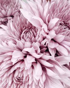 pink flower explosion