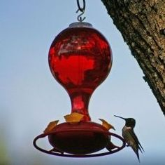 Hummingbirds+are+amazing+little+creatures+and+using+the+right+hummingbird+food+recipe+will+help+attract+them+by+the+dozens.+The+best+way+to+attract...