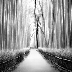 Zéglis: Bambuswald