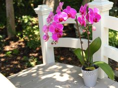 Tips on how to care for your orchid in the summer months!