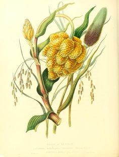 Oriental memoirs : illustrated by engravings from original drawings by William Jackson Hooker