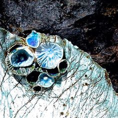 Closeup of the Sea King piece! Shell Display, Display Cases, Porcelain Ceramics, Ios App, Glaze, Shells, Coral, Pottery, Organic