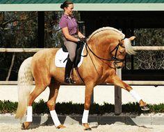 Valentonio - Canyon Sport Horses