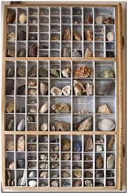 Image result for how to display fossils