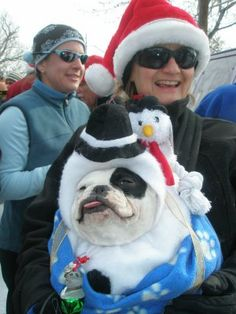 This dog won best costume at a 2008 run in Colorado