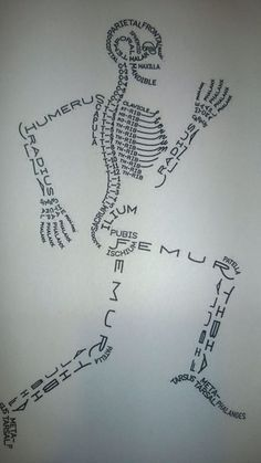 All Things Beautiful: Human Biology: Bones and the Skeletal System - Science Medical Students, Medical School, Nursing Students, Medical Science, Nursing School Humor, Student Nurse, Nursing Schools, Forensic Science Career, Nursing Student Quotes