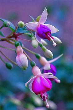 Adorable flowers  |nature| |wild life| #nature #wildlife https://biopop.com/