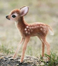 The 100 Cutest Animals Of All Time - List Inspire All amazing animals from cute cats to adorable turtles. Here is The 100 Cutest Animals Of All Time for you to enjoy. Baby Animals Super Cute, Cute Little Animals, Cute Funny Animals, Cute Cats, Cutest Animals, Big Cats, Funny Looking Animals, Cutest Dogs, Baby Animals Pictures