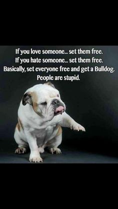 Yup. Bulldogs are better than most people, by far!