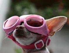 Big ears + even bigger goggles = adorable for life