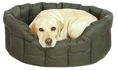 If you have a #dog and need to choose a dog bed, you should consider a waterproof dog bed. #pets #animals #papillons
