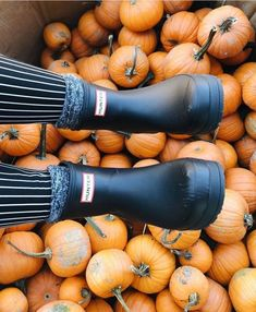 no pumpkins were harmed in the making of this photo🌟 the hunter play boot is available in colors you can only get through zappos. bc who… Fall Pictures, Fall Photos, Autumn Cozy, Fall Winter, Autumn Aesthetic, Happy Fall Y'all, Best Seasons, Autumn Photography, To Infinity And Beyond