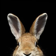 black, brown, bunny, curious, cute