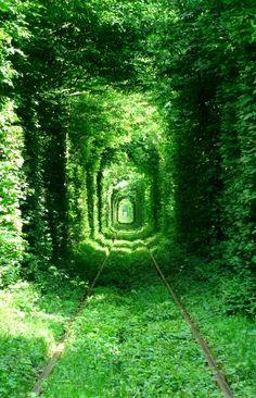 The Tunnel of Trees  Rivne, Ukraine