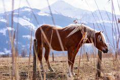 Pferd muss man sein