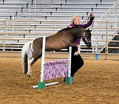 Offering you an amazing all around gelding that is World Show bound!!! He can be easily maintained by an amateur as he is fun and easy to work with! Already very seasoned, this gelding is happy to take care of YOU in the showring! Offered by Mini Horse Sales