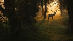 Nordic walking i podglądanie dzikich zwierząt