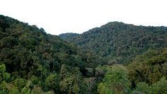 nyungwe forests