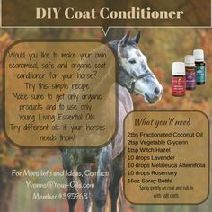 DIY horse coat conditioner Young Living