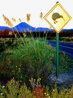 National Park signpost and Mt. Ngauruhoe at dawn, North Island, New Zealand.