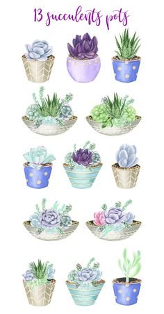 22 watercolor illustrations of succulents pots, hand-painted in watercolors. Includes succulents pots in beautiful shades of green and purple. Succulents Drawing, Watercolor Succulents, Watercolor Flowers, Watercolor Paintings, Succulents Art, Succulents Wallpaper, Indoor Succulents, Propagating Succulents, Planting Succulents
