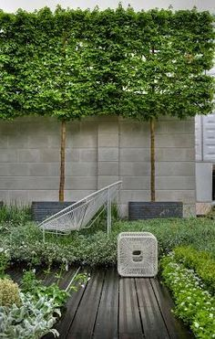 Pleached trees in grey planters. Dark grey decking edged with low planting