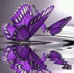 Teresa with the peaceful flight of the Butterfly Lovely purple and white reflections