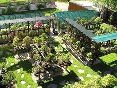 busy but zen bonsai backyard Pine Bonsai, Bonsai Plants, Bonsai Garden, Japan Garden, Bonsai Styles, Garden Coffee, Garden Stand, Japanese Garden Design, Gardening Magazines