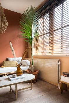 Palm Garden, Home And Garden, Room Inspiration, Blinds, Sweet Home, Curtains, Living Room, Bedroom, Interior