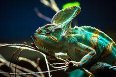 Chameleon by Jack Benson on 500px