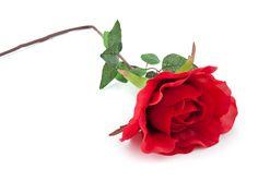 ROSE LARGE RED