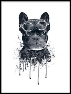 A poster of a French bulldog, a very cute but also cool illustration that fits nicely in your home. Mix and match this print with our other art posters and art prints in a larger picture wall that fits your own personal style. Desenio.co.uk