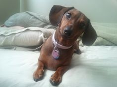 5 Problems Only Dachshund Owners Will Understand