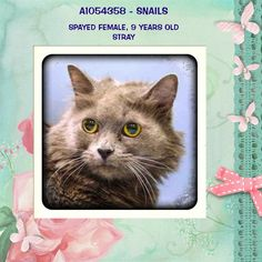 *KILLED>Crossposting to save lives: Snails: 9 year old stray at Manhattan Center is running out of time