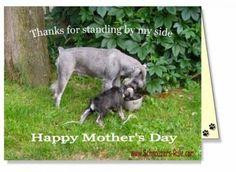 Send a free Schnauzer Ecard to a special dog mom via Schnauzers-Rule.com