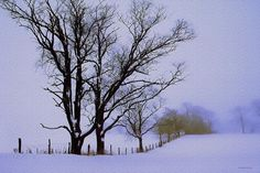 Winter Afternoon ~ by Ron Jones