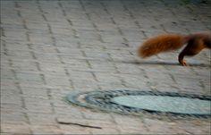 Flinkes Eichhörnchen - Jahreszeiten - Galerie - Community