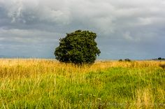 Tree in the fields of Whakatiwai with the Firth of Thames in the background    @visit New Zealand  Pentax K20D • 1/160sec • f/11 • 60mm • ISO 200 • smc Pentax-DA 18-55mm f3.5-5.6 AL II