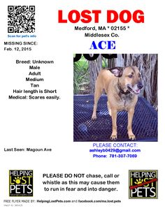 >> Medford, MA - Lost Brown Dog  Magoun Ave  DO NOT CHASE. Have you seen Ace. He has been gone since February 12. He is shy and scares easy but will come to a gentle voice. Be on the lookout and help get this missing boy home safe.  Please call (305) 300-6566 or (781) 307-7069  Find Ace: https://www.facebook.com/groups/1551588348425534/  Helping Lost Pets: http://www.helpinglostpets.com/petdetail/?id=385425 HeLP map: http://www.helpinglostpets.com/v2/?pid=385425 — at 02155.