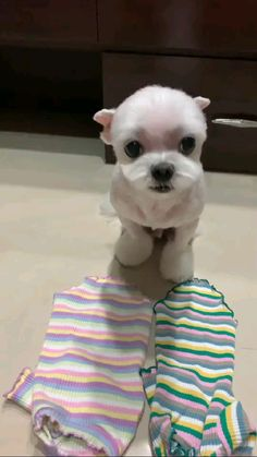 Baby Animals Pictures, Cute Animal Photos, Cute Animal Videos, Funny Animal Pictures, Cute Videos, Animal Pics, Funny Videos, Cute Baby Dogs, Cute Funny Dogs