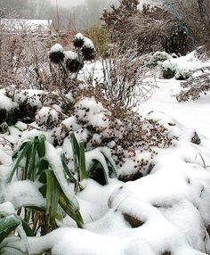 Snow is a hassle when you have to shovel it, but it's a gift to our gardens, providing an insulating blanket that protects roots and crowns from extreme cold and rapid freeze-and-thaw cycles.