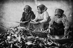 Kukoricafosztás. Old Pictures, Old Photos, Vintage Photos, Vizsla, Folk Dance, Old Photographs, Folk Music, Historical Photos, Art And Architecture