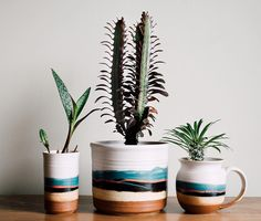 Eagle Ceramic Tumbler You say mug, we say planter! Blue Eagle is back, and we can't get enough.You say mug, we say planter! Blue Eagle is back, and we can't get enough. House Plant Care, House Plants, Ceramic Pottery, Ceramic Clay, Pottery Pots, Painted Pottery, Cerámica Ideas, Deco Floral, Décor Boho