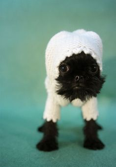 Baby Brussels Griffon in Pajamas