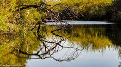 Ősszel is gyönyörű a Tisza-tó. Bérelj ladikot vagy szállj be egy vezetett programba és járd be a varázslatos, millió színben pompázó őszi Tisza-tavat! Haiku