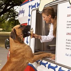 K99 make the first ice cream van for dogs  #prstunts